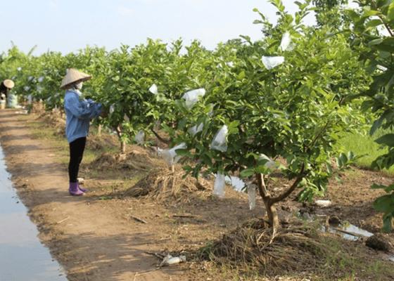 Đất trồng cây lâu năm thuộc đất công nghiệp
